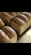 新商品「かつおぶし食パン」!!の画像